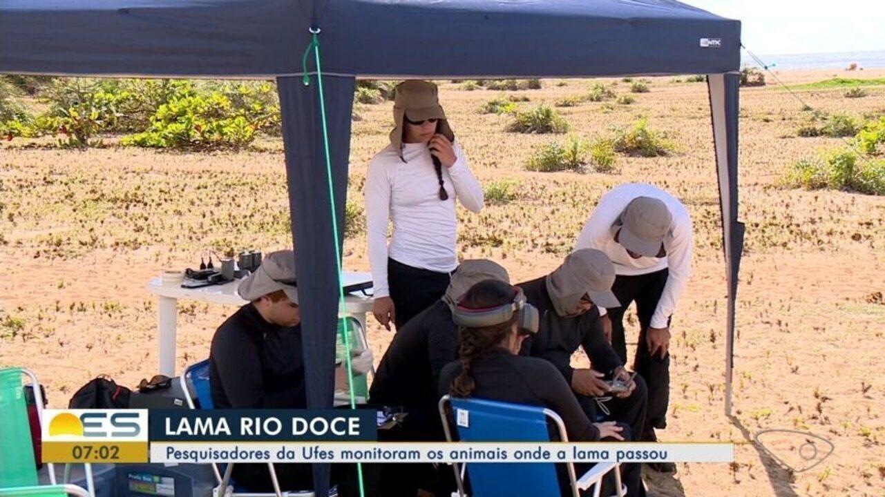 Pesquisadores da Ufes monitoram os animais onde a lama do Rio Doce passou