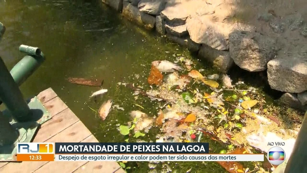 Esgoto irregular e calor podem ter sido causas da morte de milhares de peixes na Lagoa