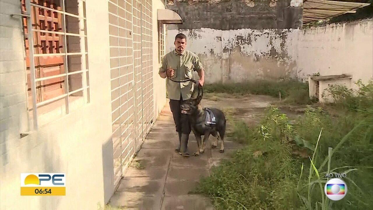 Lei regulamenta uso de cães de guarda em Pernambuco