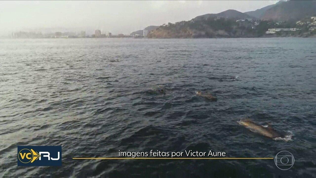 Golfinhos são flagrados no mar da Barra da Tijuca