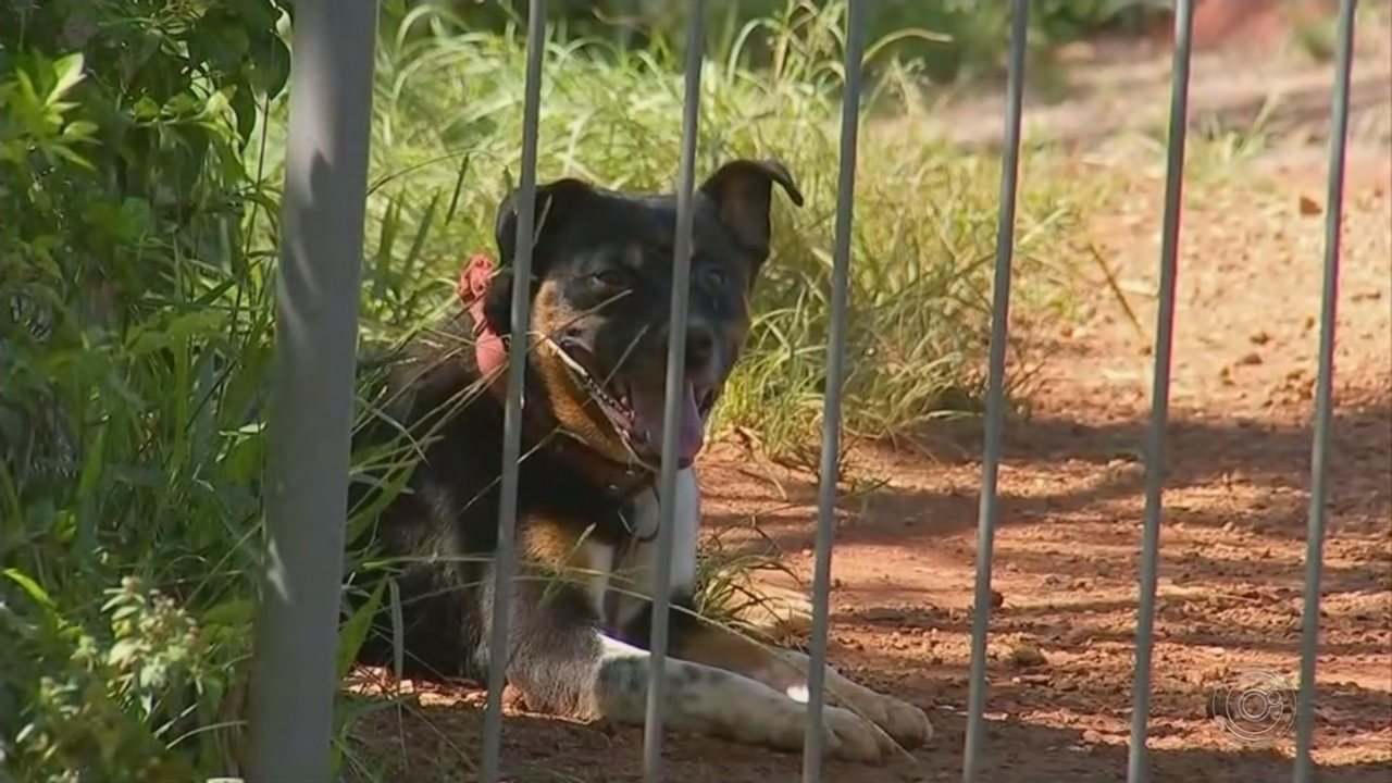 Moradores denunciam maus-tratos aos animais em canil de Buri