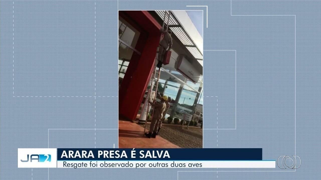 Bombeiros resgatam arara presa em Rio Verde