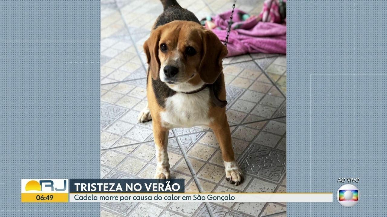 Cadela morre por causa do calor em São Gonçalo