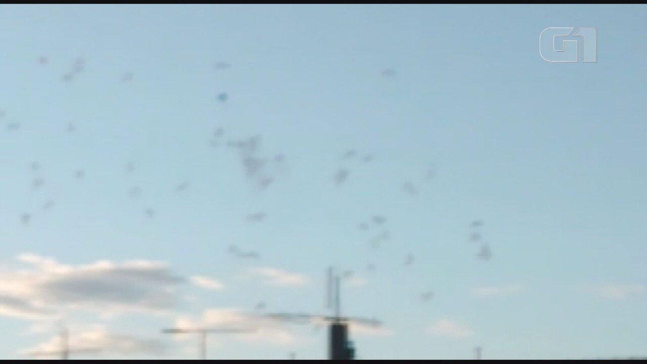 Morador do Residencial Cosmos filma balão próximo ao Aeroporto de Viracopos