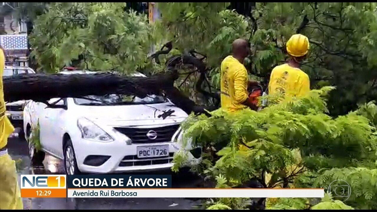 Parte de muro de arrimo e árvore caem na Zona Norte do Recife