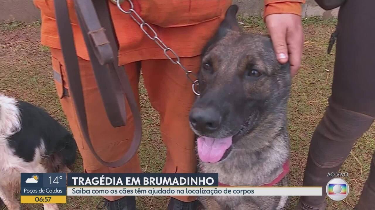 Cães têm ajudado na localização de corpos em Brumadinho