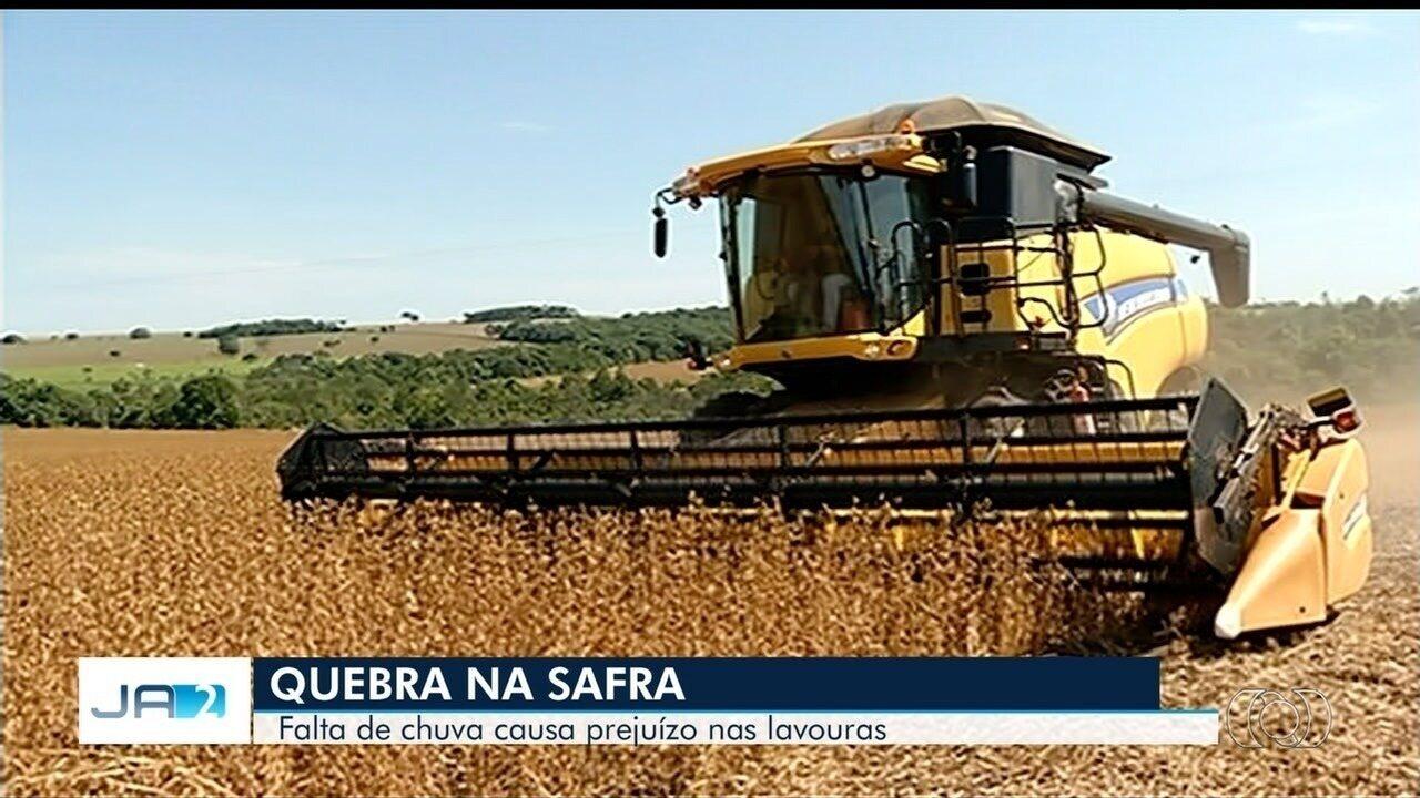Produtores rurais de Goiás relatam queda na safra de soja