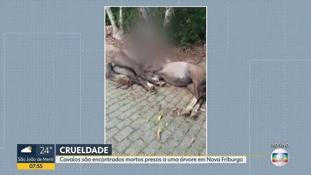Cavalos morrem enforcados em Nova Friburgo