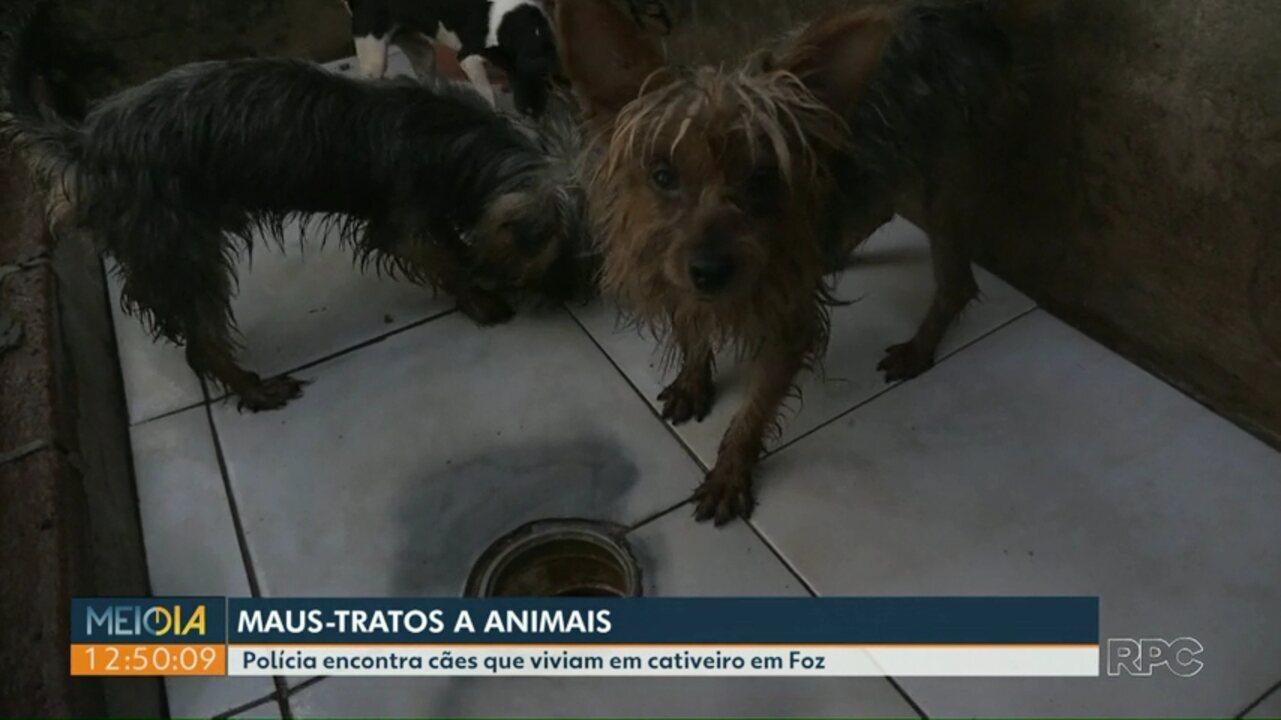 Polícia encontra cães que viviam em cativeiro no Três Lagoas, em Foz