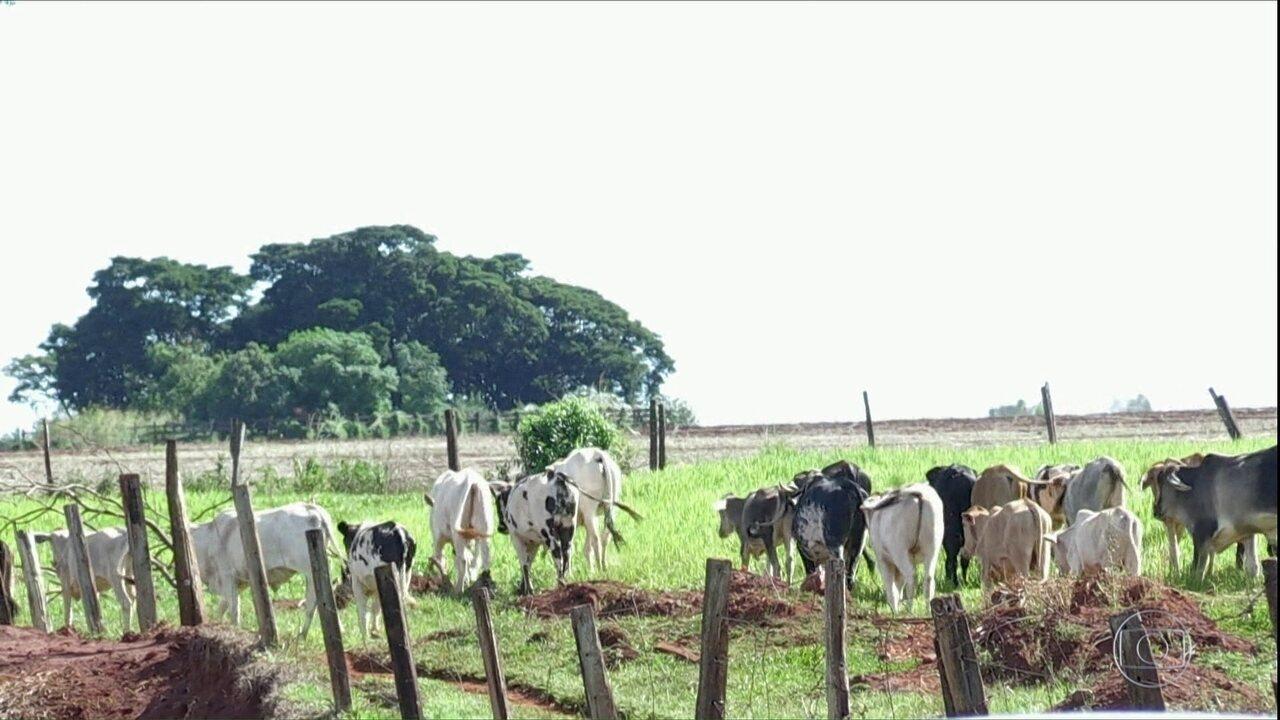 Roubo de gado assola fazendas no norte do Paraná