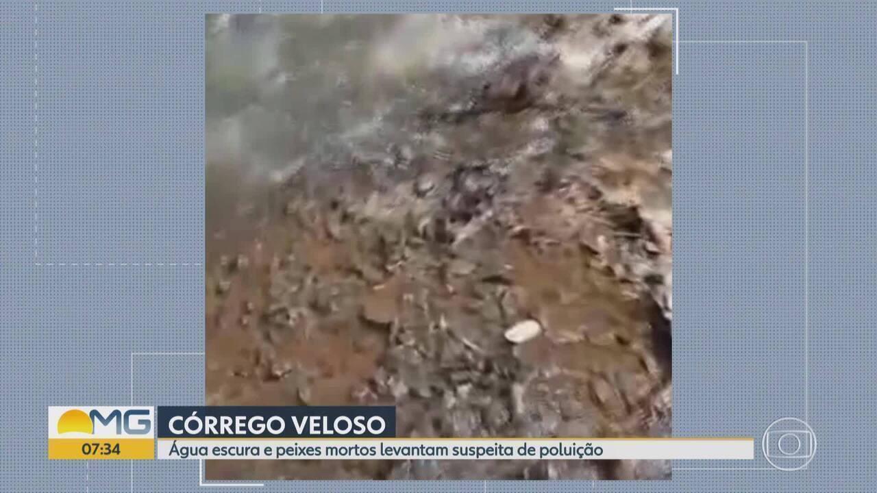 Telespectadora denuncia morte de peixes no Córrego Veloso, em Itatiaiuçu