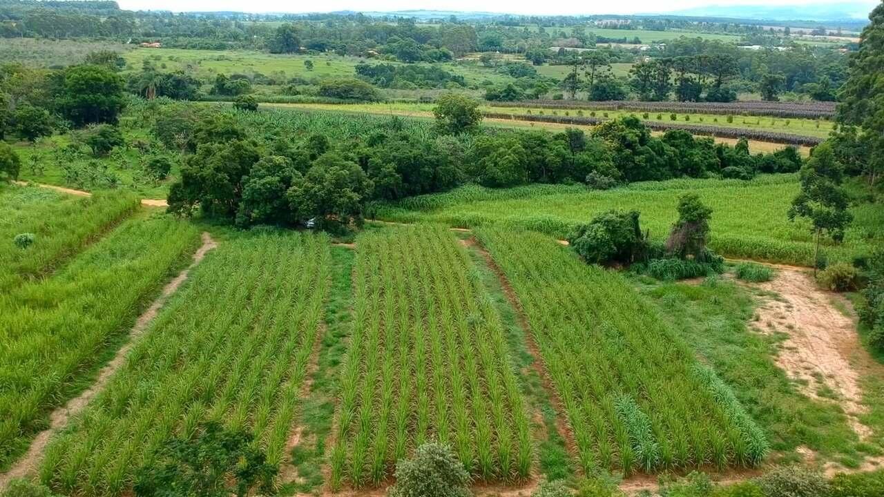 Fazenda em Araçoiaba da Serra destina toda a produção para alimentar animais