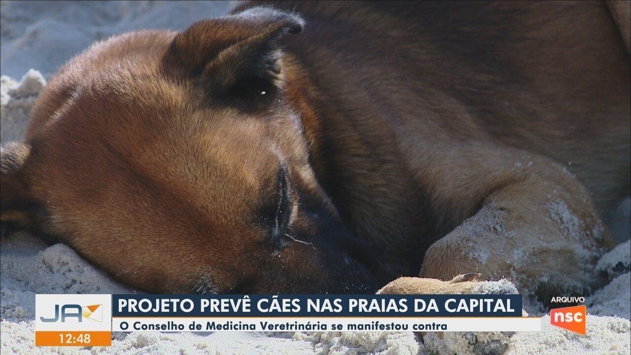 Câmara de Vereadores de Florianópolis aprova projeto que permite cães em praias