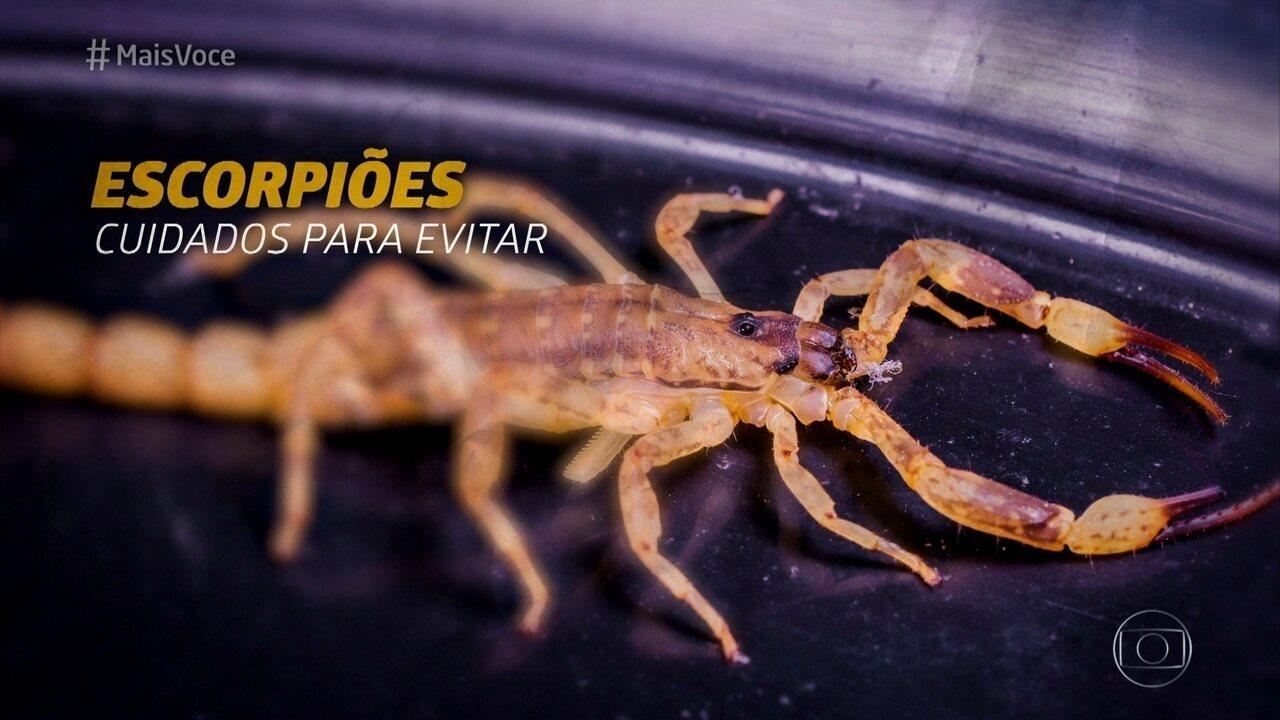 Saiba mais sobre o escorpião amarelo