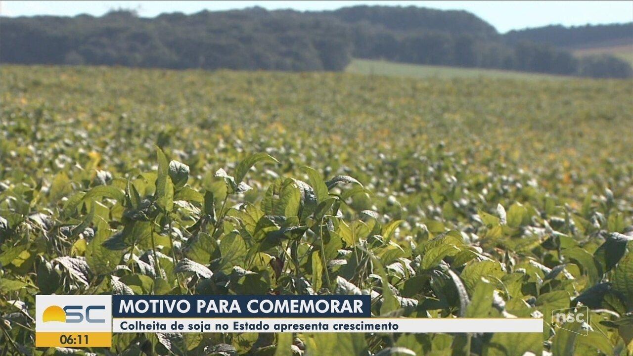 Produção de soja de Santa Catarina cresce nos primeiros dois meses de 2019