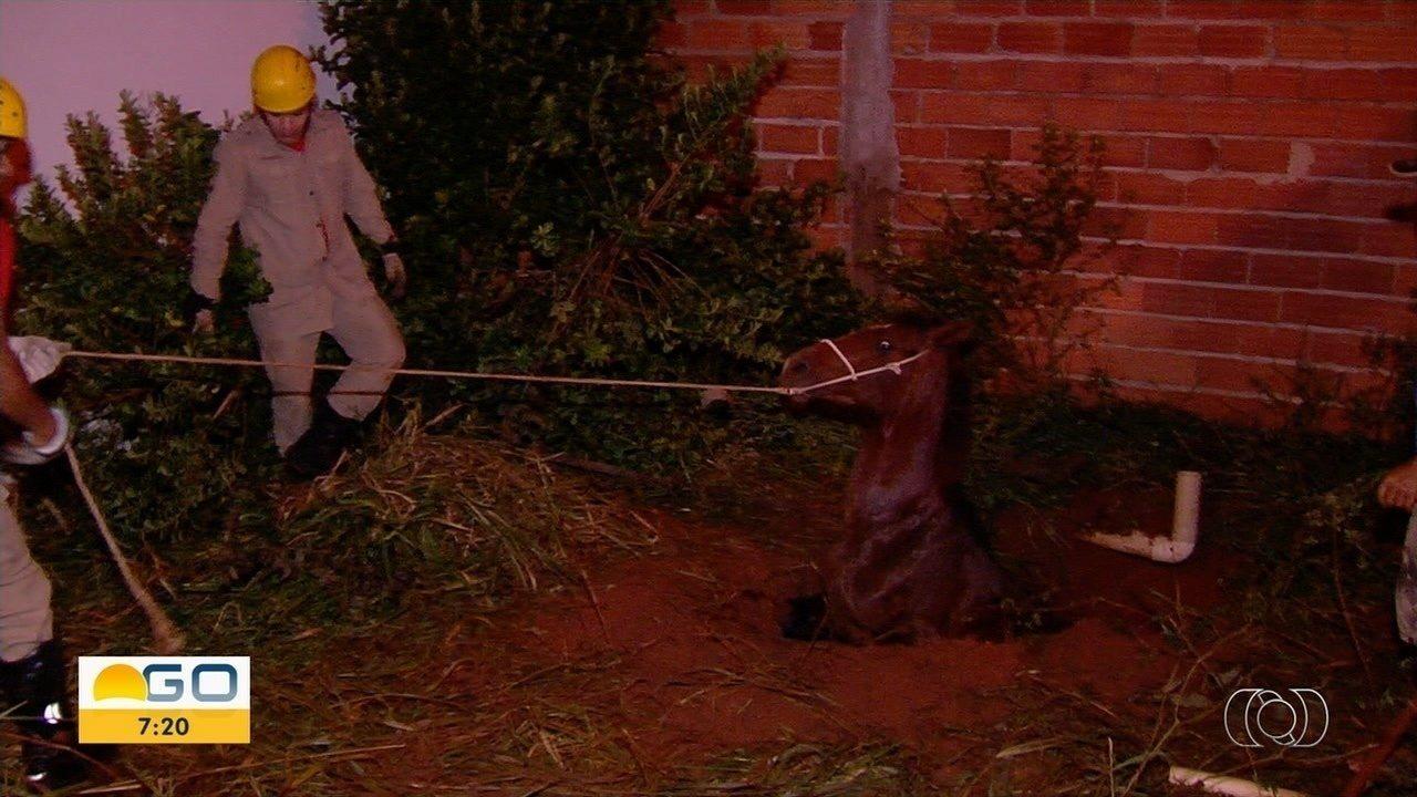 Cavalo é retirado de buraco em lote de Goiânia