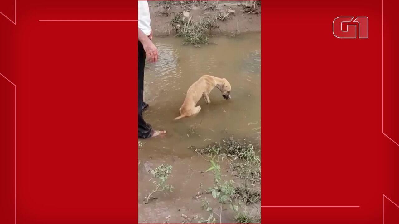 Cadela soterrada após enxurrada é resgatada com vida por agricultor no interior do Ceará