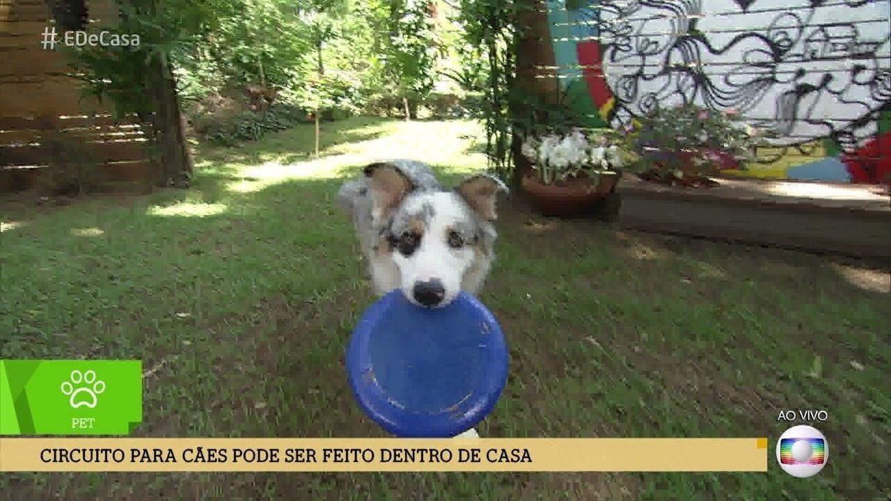 Alexandre Rossi dá dicas de exercícios para cães