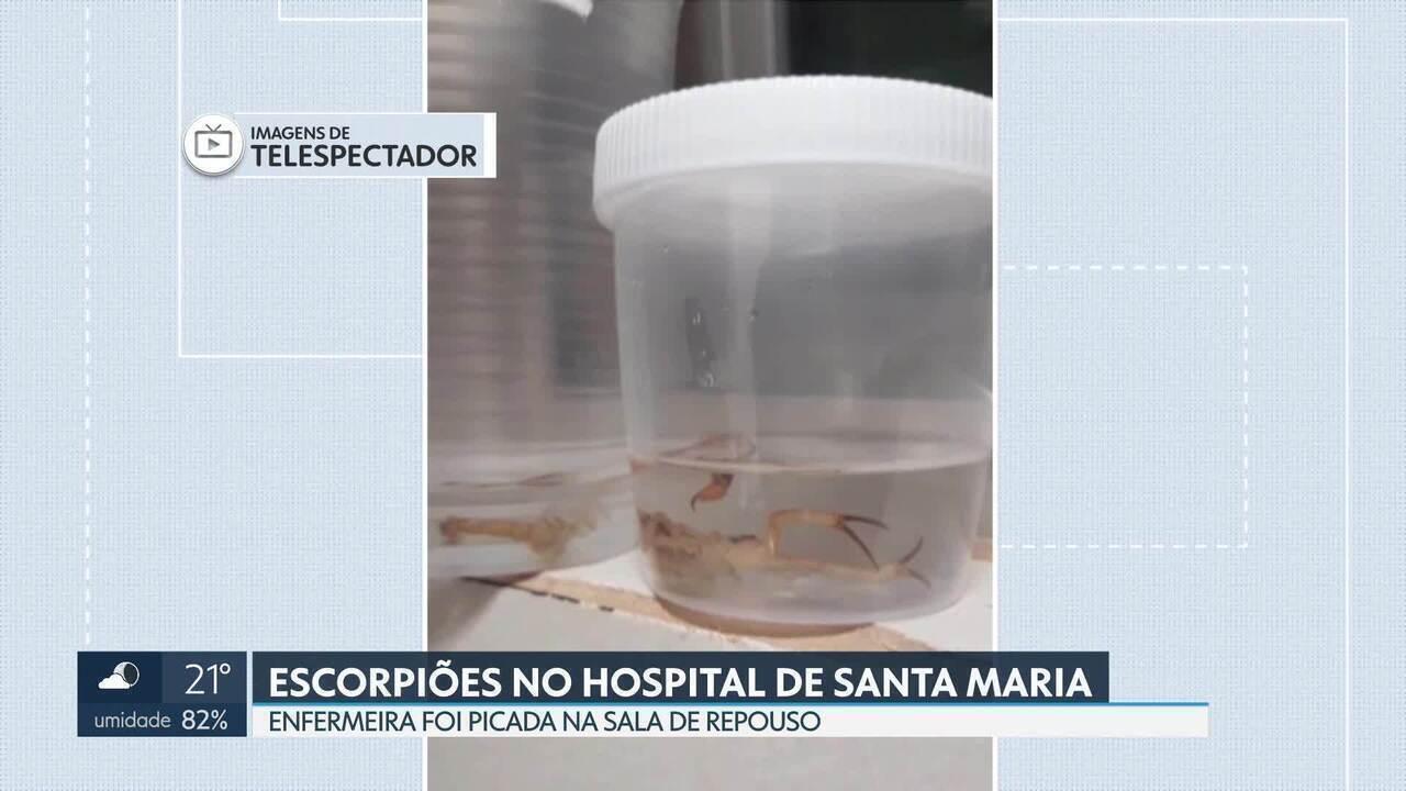 Funcionários encontram escorpiões no Hospital Regional de Santa Maria