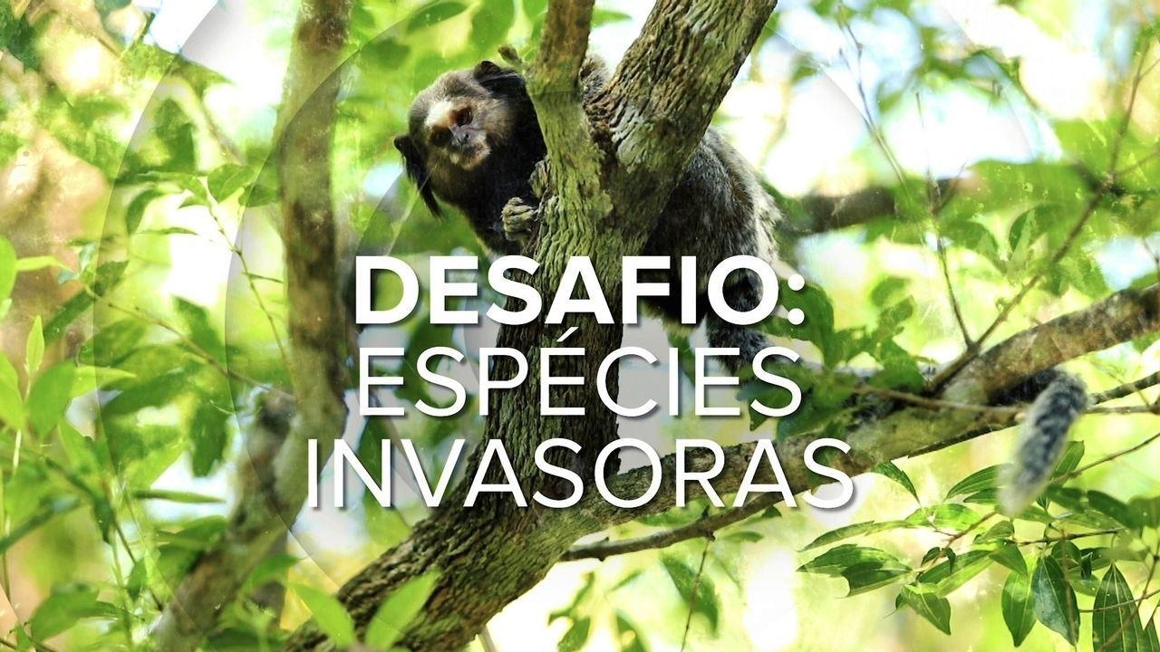 Conheça as espécies exóticas invasoras em Santa Catarina no Desafio Natureza