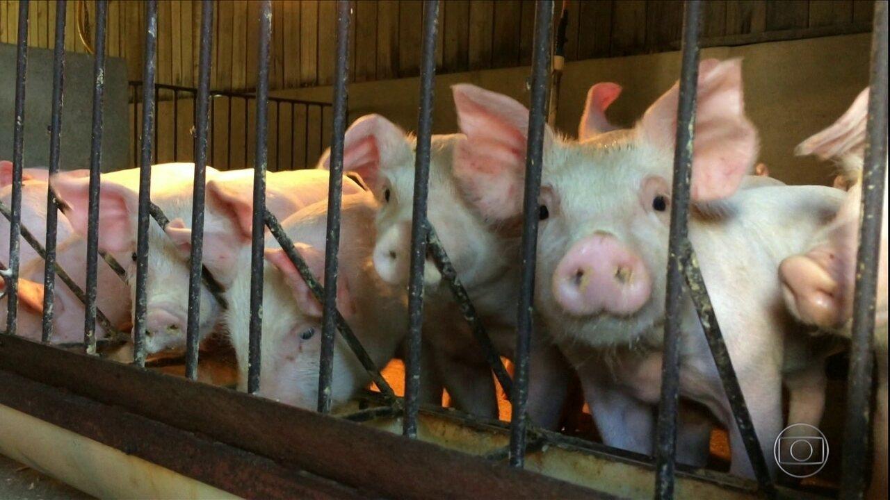 Surto de peste suína africana na China altera dinâmica do mercado de carnes no Brasil