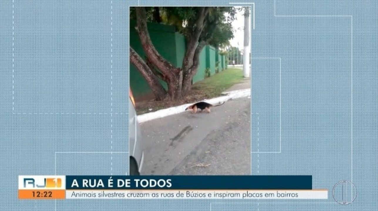 Animais silvestres cruzam as ruas de Búzios e inspiram placas de trânsito
