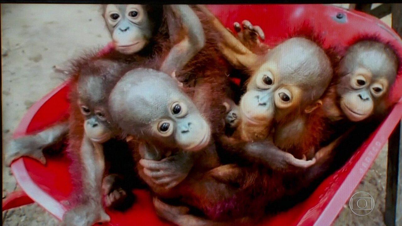 Um milhão de espécies de animais e plantas correm risco de extinção