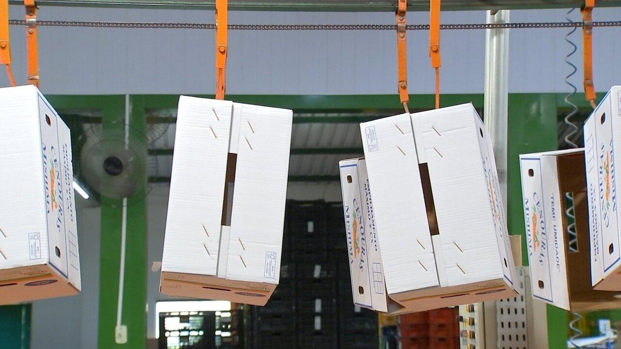 Caixas de plástico e papelão ganham espaço no transporte de hortaliças