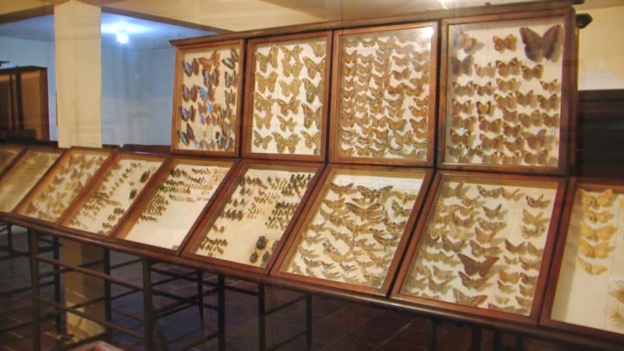 Plug visita o maior museu de insetos da América Latina, em Guarapuava