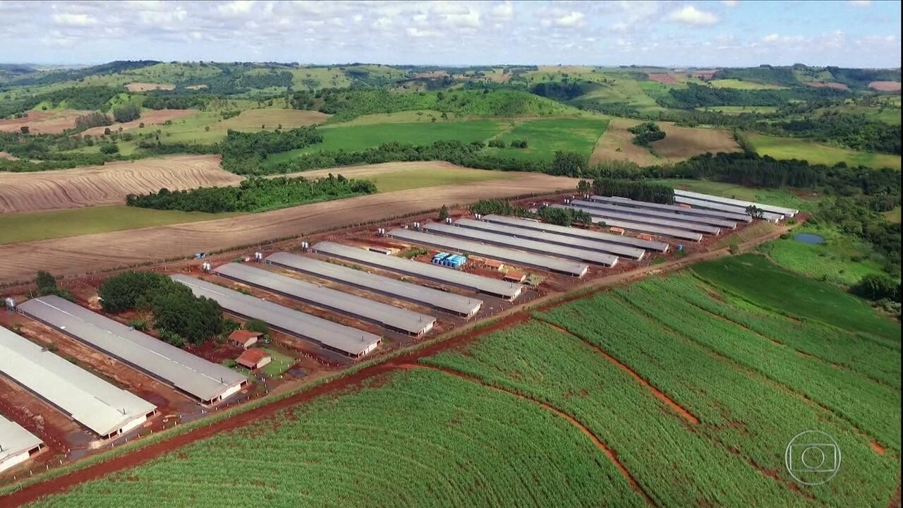'Frango 4,0': conheça o condomínio de granjas que produz 7 milhões de aves por ano