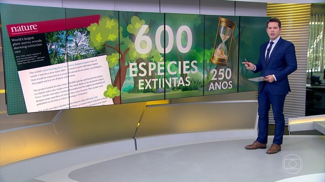Dois estudos mostram o aumento do desmatamento no mundo