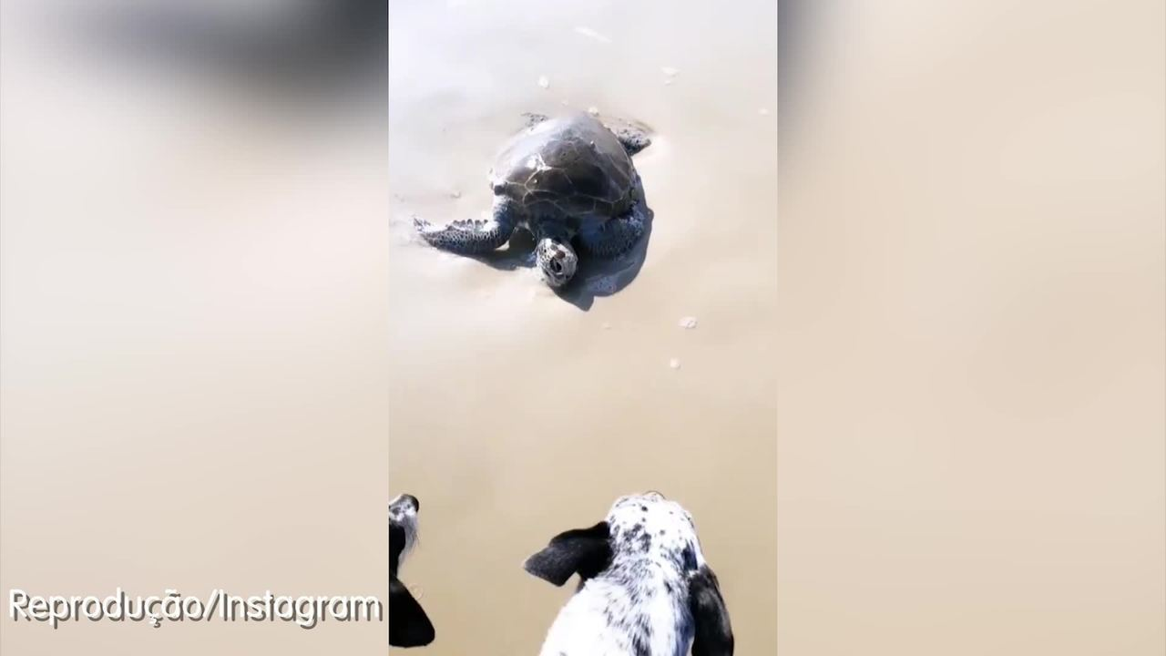Deborah Blando lamenta morte de tartaruga na praia