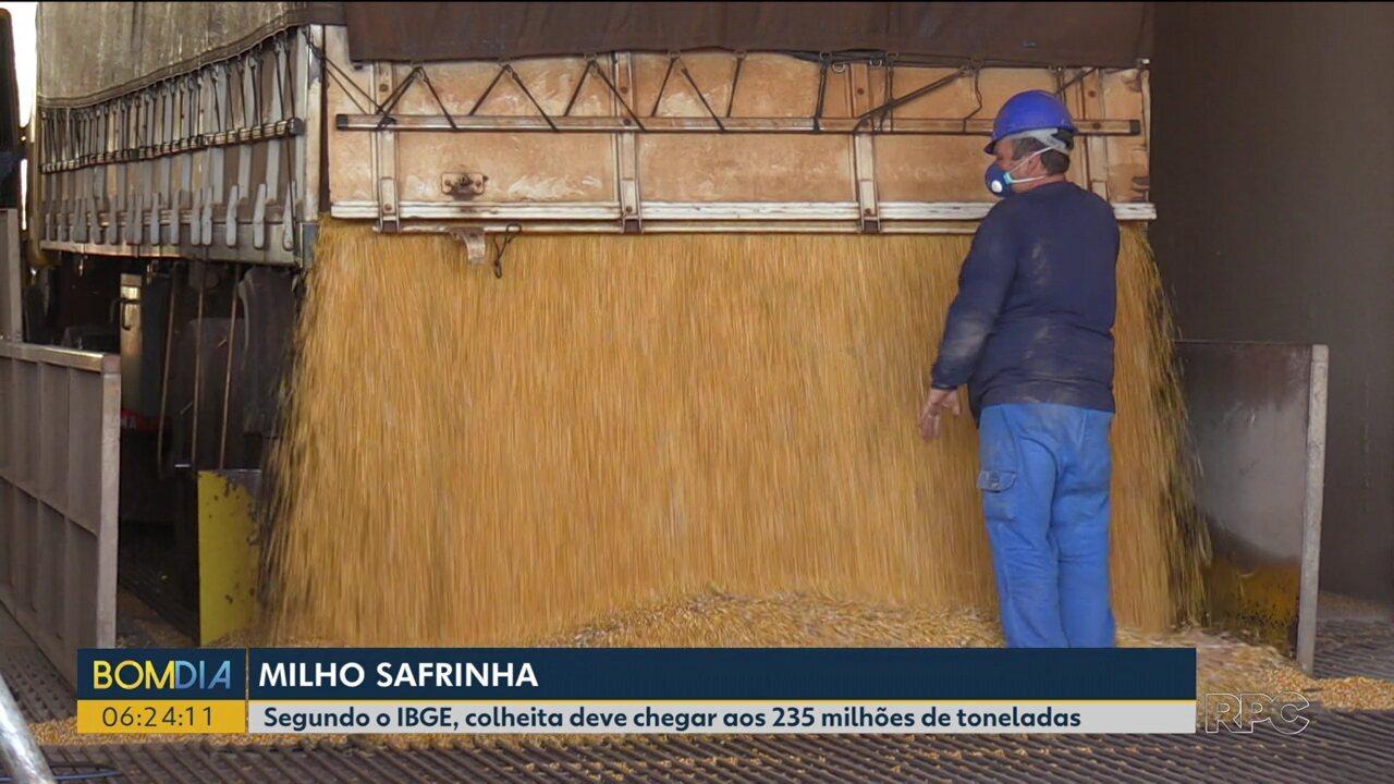 Safra de milho deve bater recorde em 2019