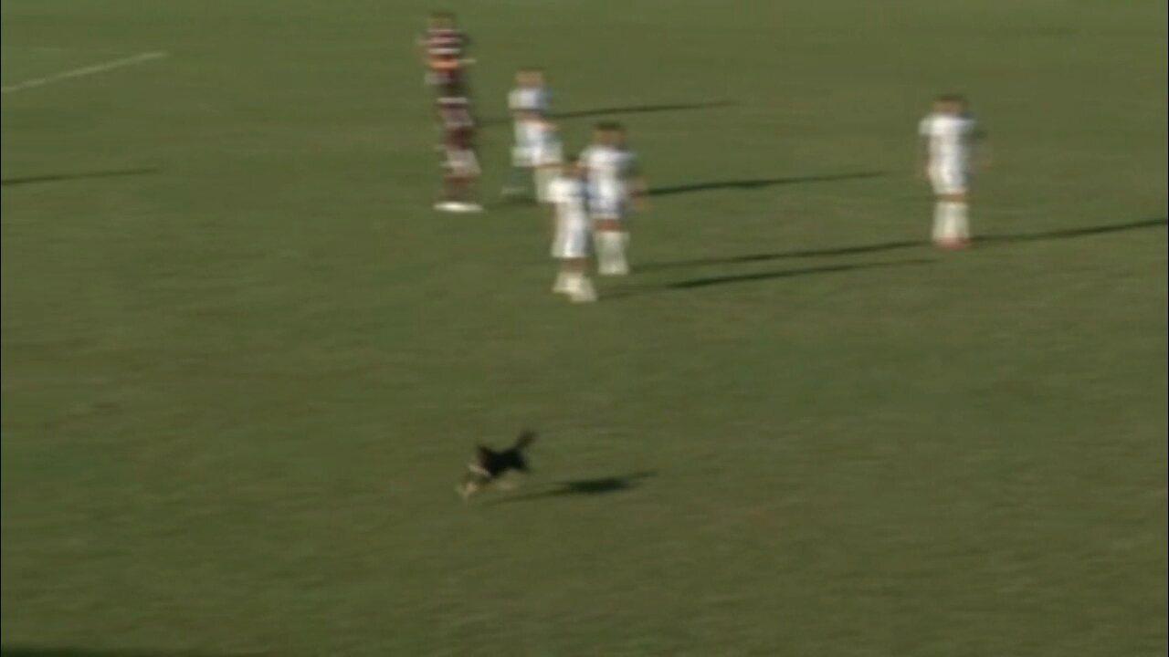 Cachorro invade campo e dribla jogador no jogo entre Cianorte e Ferroviária, na Série D