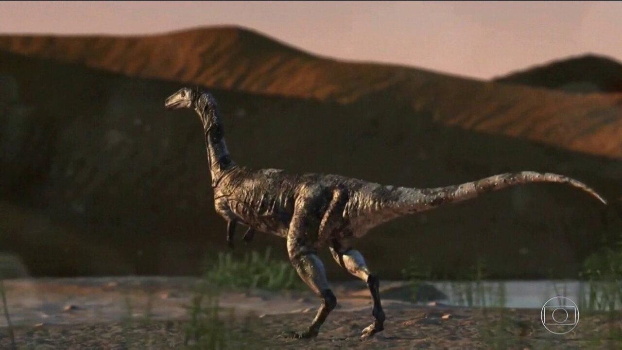 Cientistas anunciam a descoberta de uma espécie única de dinossauro que viveu no Brasil