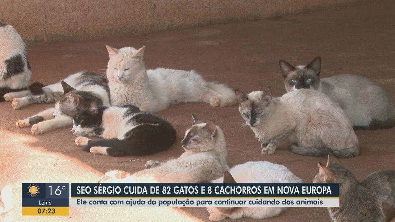 Desempregado cuida de 82 gatos e 8 cachorros abandonados em Nova Europa