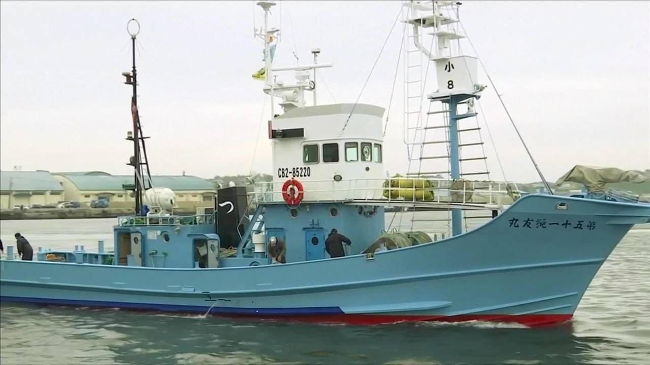 Japoneses voltam a caçar baleias para consumo