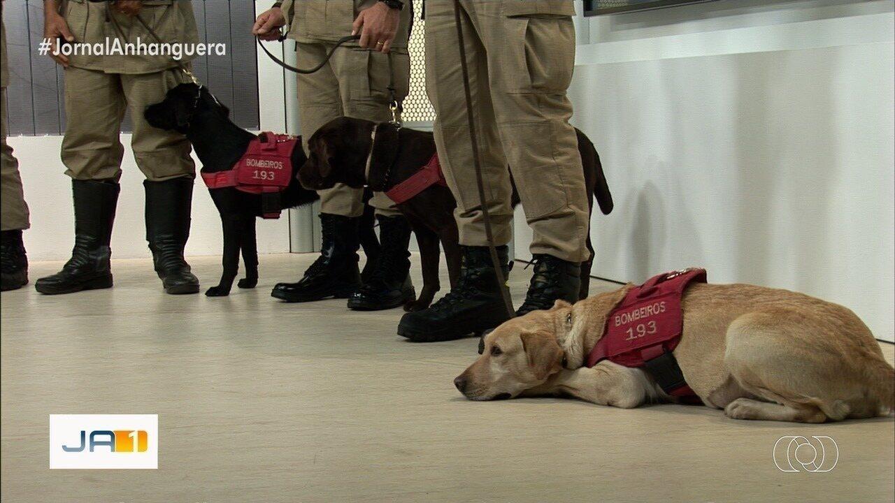 Cães dos Bombeiros de Goiás que atuaram em Brumadinho estão com problemas de saúde