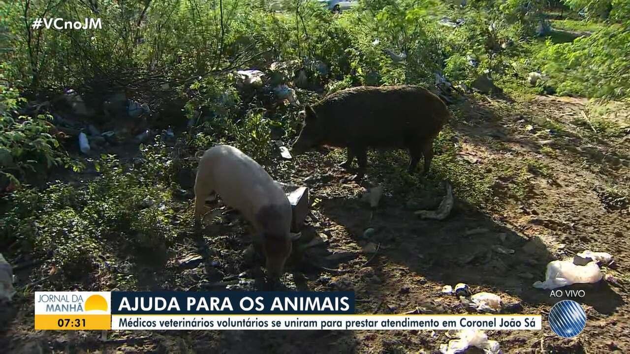 Médicos veterinários se unem para ajudar animais atingidos por rompimento de barragem