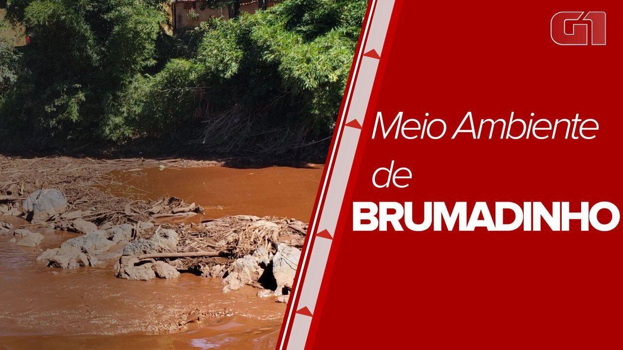 Rio Paraopeba continua a sentir os efeitos do rompimento da barragem de Brumadinho