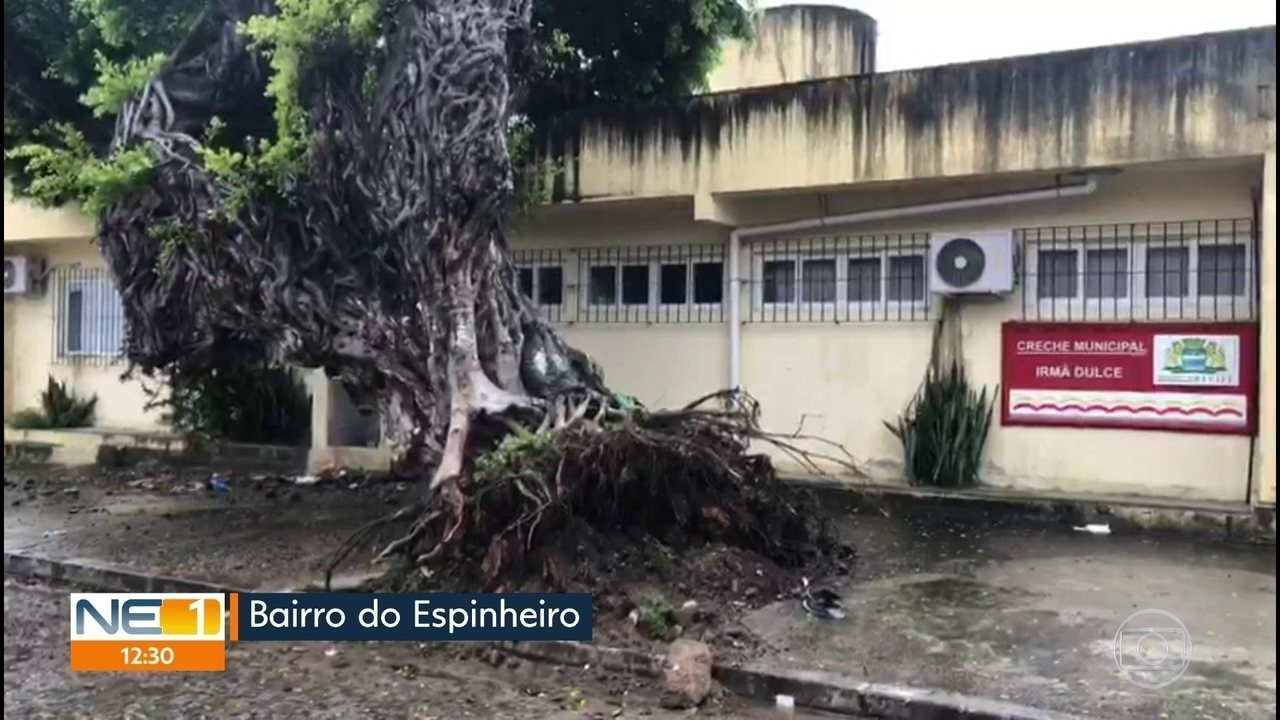 Árvores caem e causam transtornos para moradores no Recife