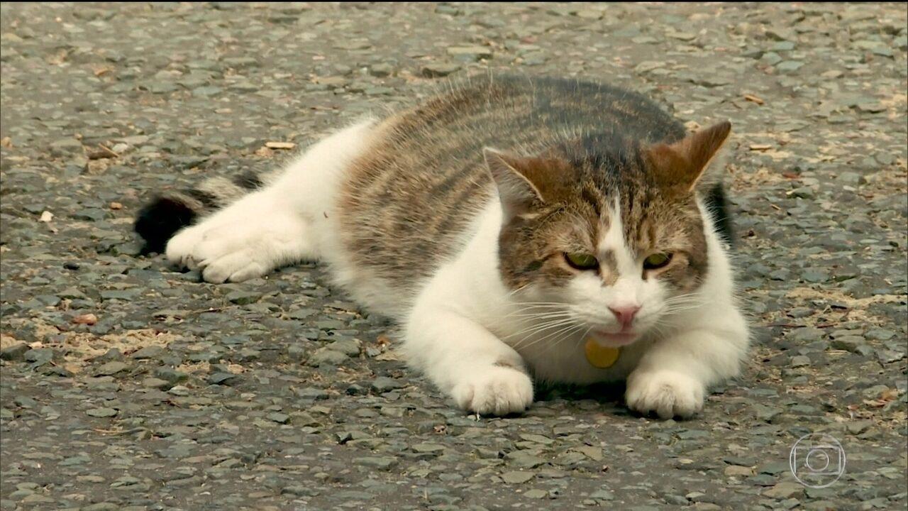 Gato é personagem ilustre da política britânica
