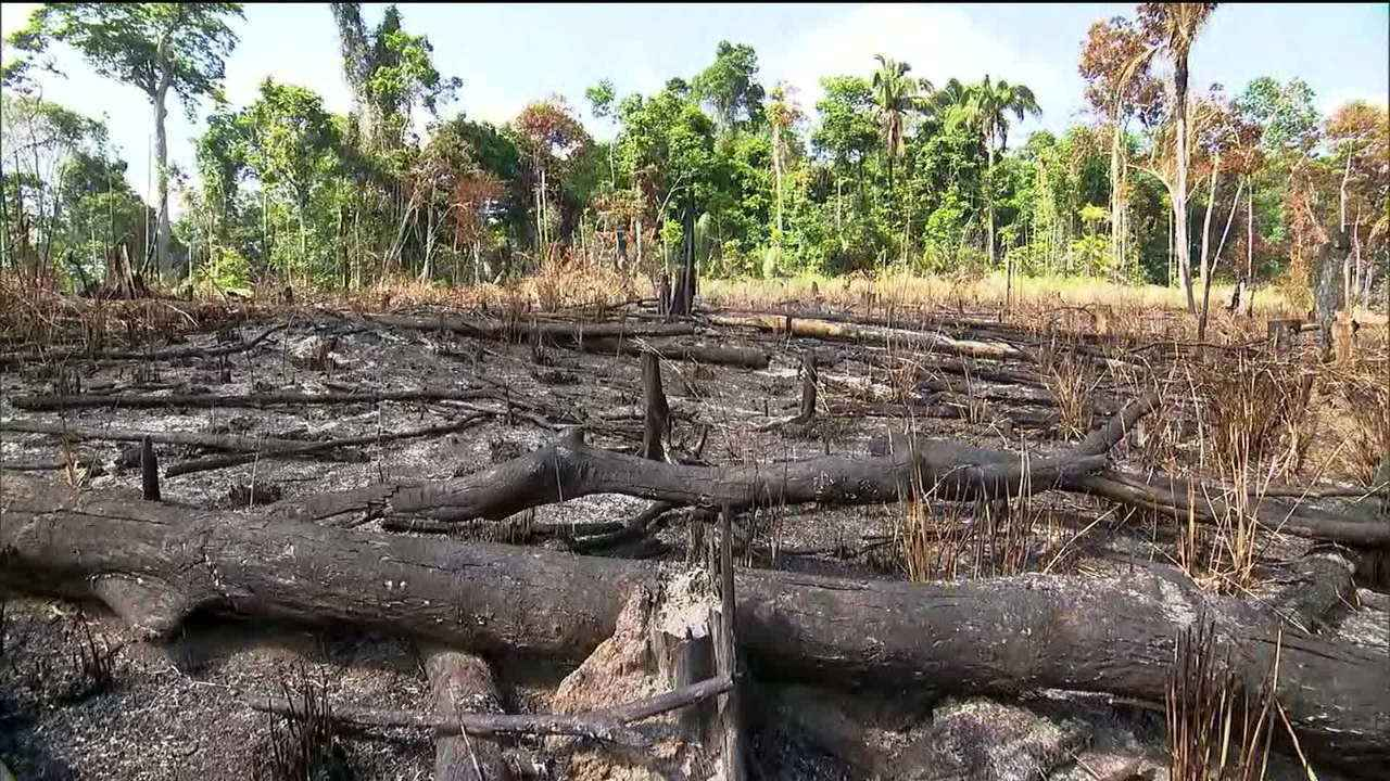 Inpe: desmatamento na Amazônia cresce 278% em julho