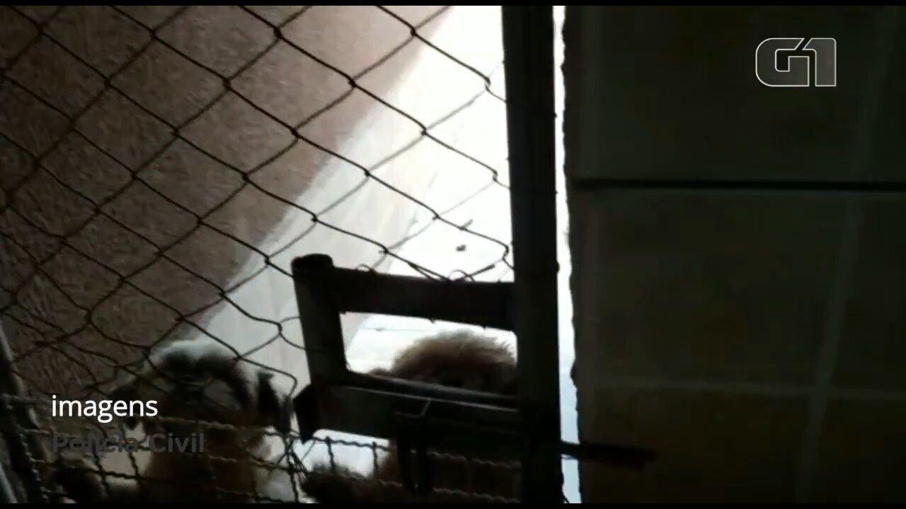 Polícia Civil mira rede de pet shops suspeita de golpes e maus-tratos