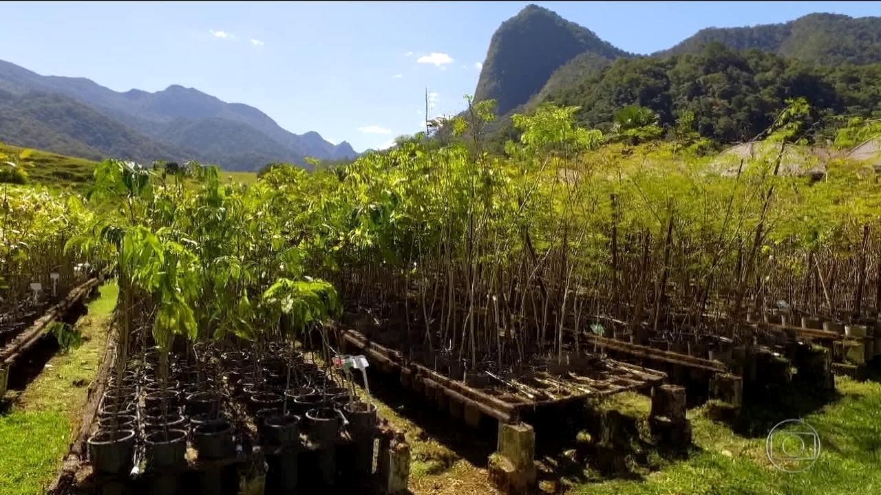 Floresta Olímpica é promessa não cumprida dos Jogos do Rio em 2016
