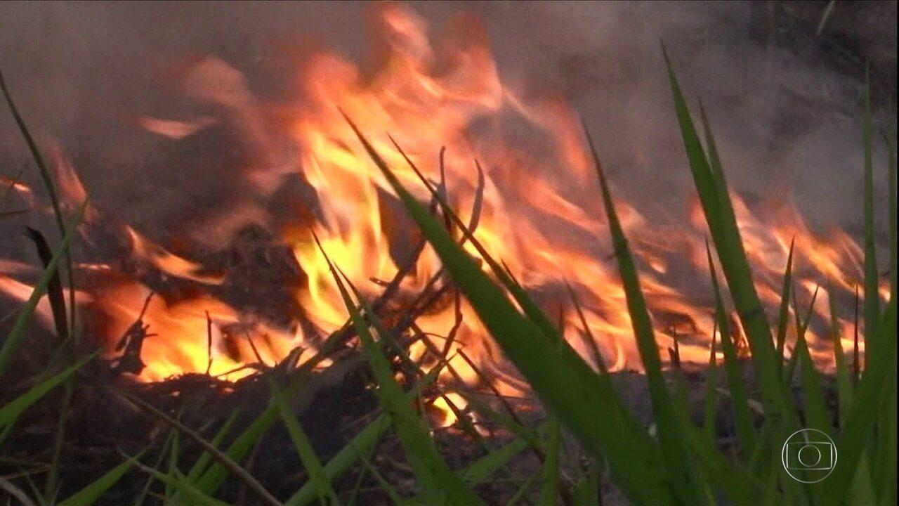 Em oito meses, Brasil registrou mais de 74 mil focos de queimada