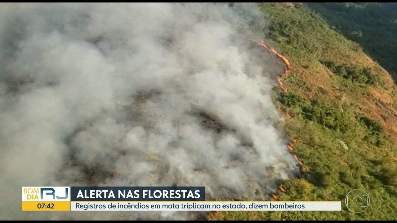 Registros de incêndios em mata triplicam no Rio de Janeiro, dizem bombeiros