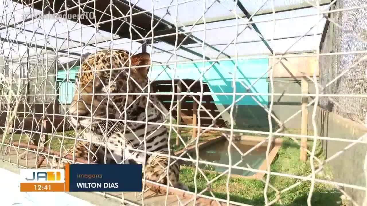 Animais silvestres machucados por conta de queimadas são tratados no Centro de Fauna