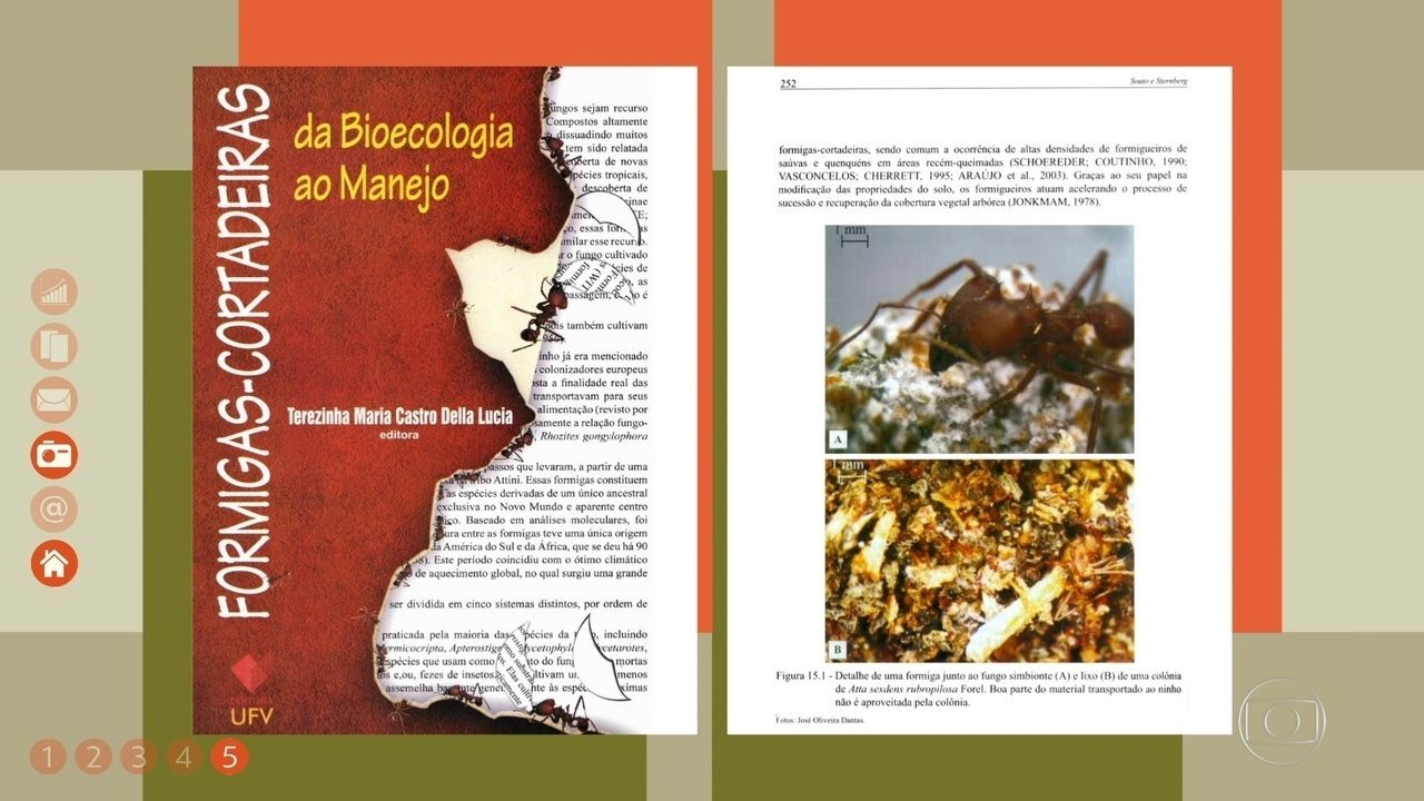 Como evitar o ataque de formigas cortadeiras nas plantações