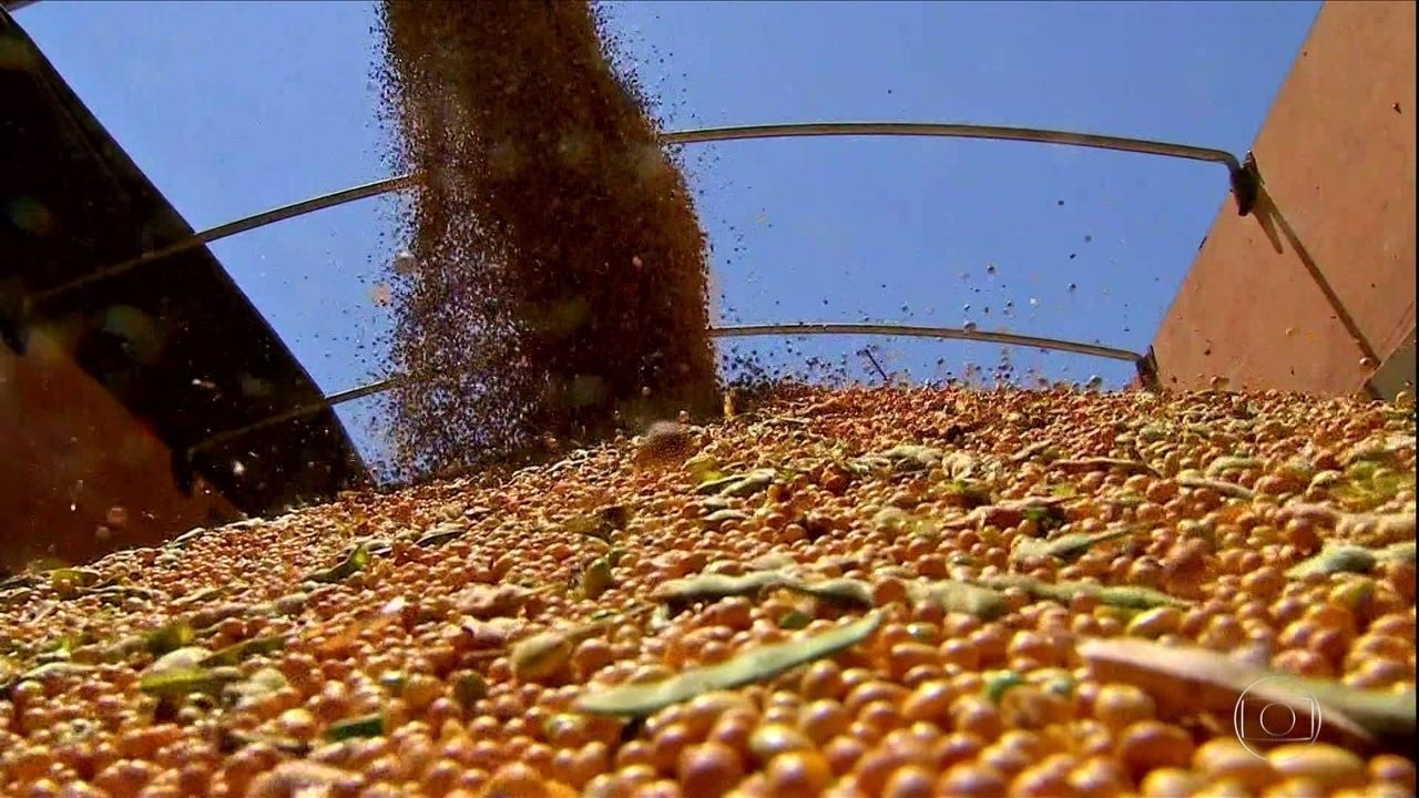 Dólar e aumento da demanda fazem preço da soja subir em MS